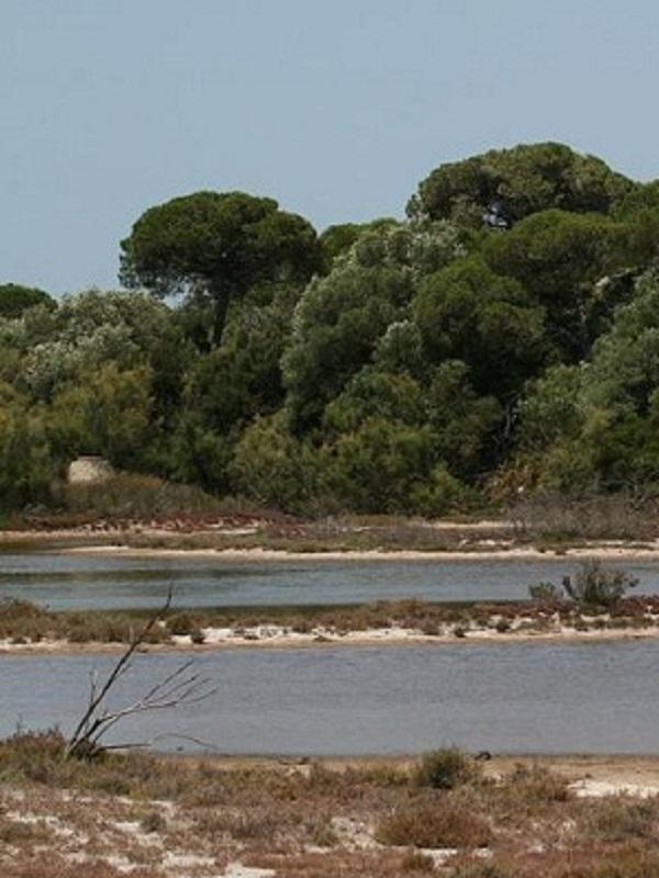 Luz verde a la tramitación del II Plan de Desarrollo Sostenible del Parque Natural de la Bahía de Cádiz