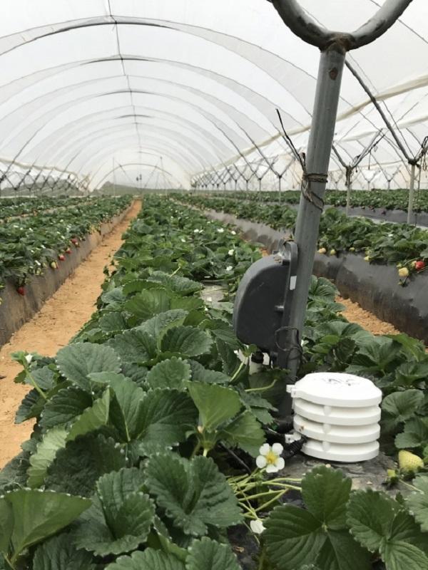 Ferdoñana contribuye al ahorro de hasta un 40% de agua en el cultivo de frutos rojos