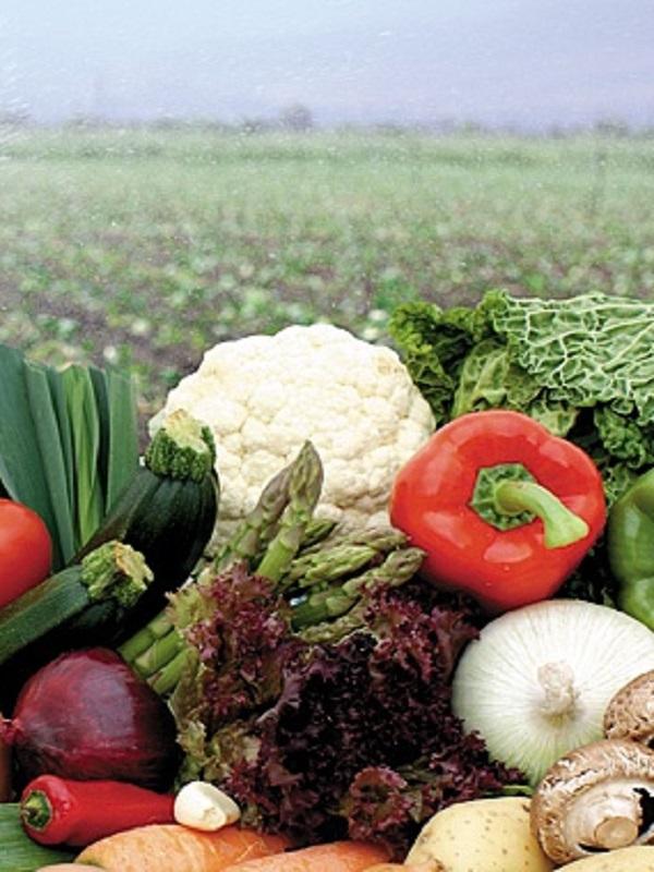 El sector de frutas y hortalizas prevé crecer más de un 5% en 2018