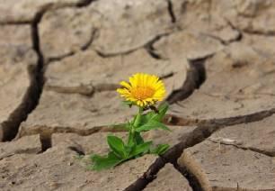El cambio climático ya ha causado pérdidas de más del 10% a la  biodiversidad