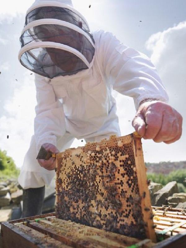 El Ministerio de Agricultura, Pesca y Alimentación promueve un estudio sobre las mieles monoflorales que contribuirá al fomento de su producción y comercialización