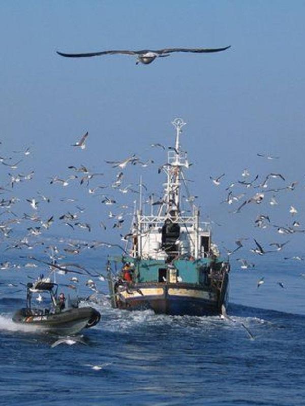 La pesca de palangre mata a 300.000 aves marinas en el Mediterráneo
