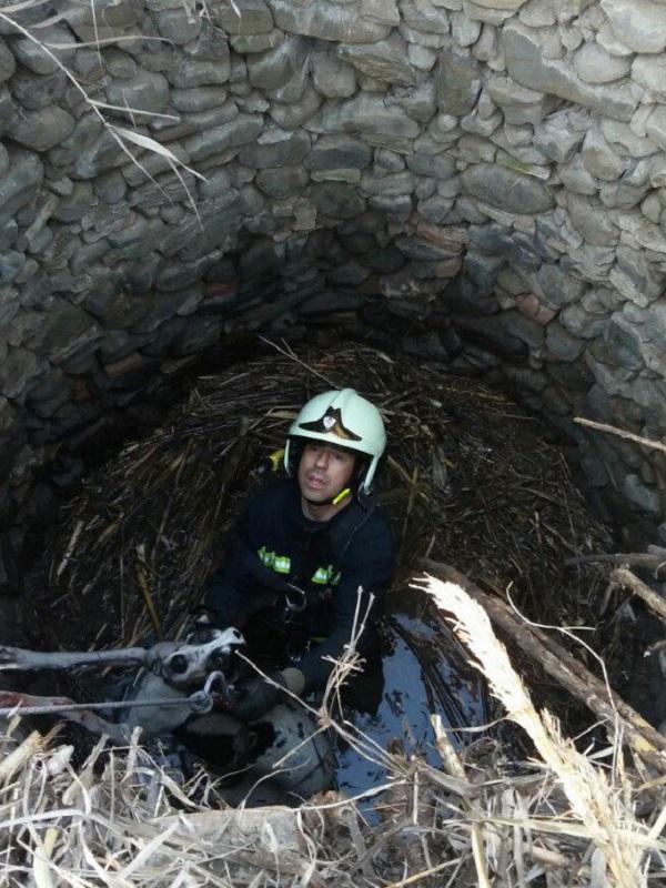 La Benemérita rescata un perro que había caído en un pozo