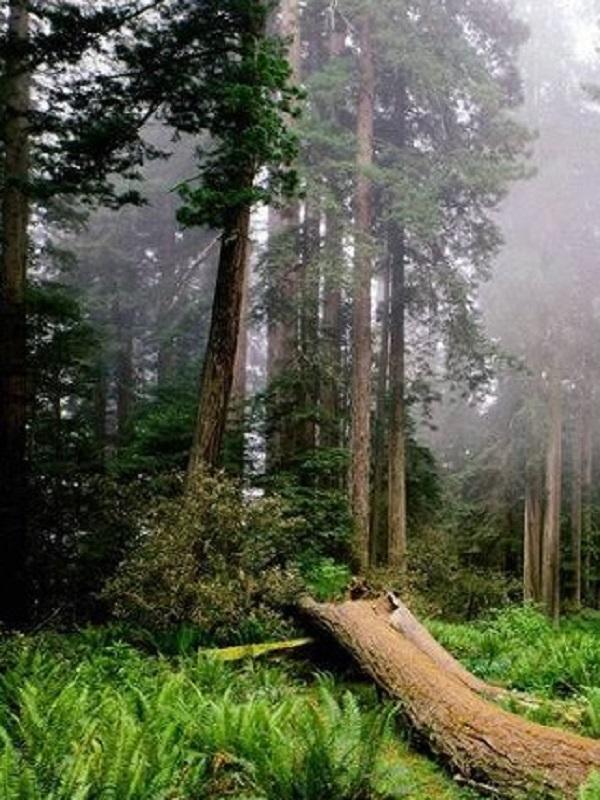 Preservar la naturaleza durante treinta años tiene un nombre: SEPRONA