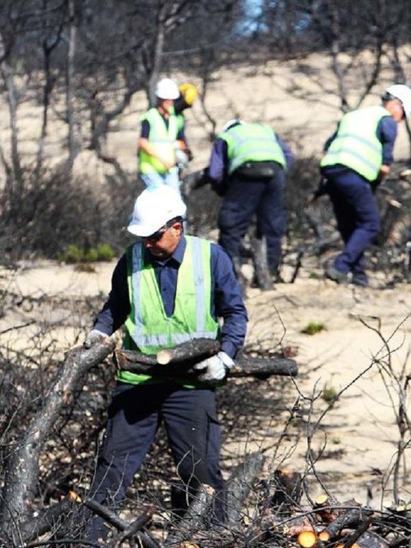 Alerta máxima ante el plan de restauración del incendio forestal de Doñana