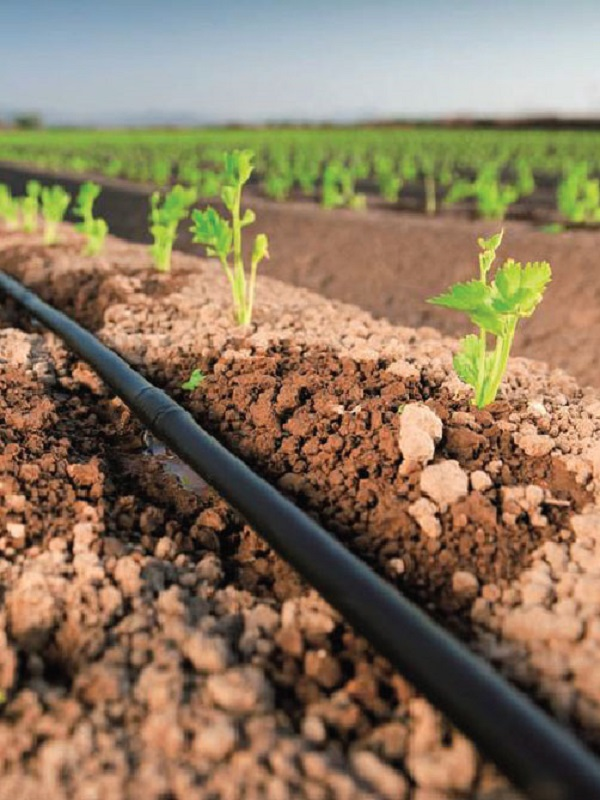 Los suelos agrícolas catalanes contienen tanto carbono como el que Cataluña emite en 4 años