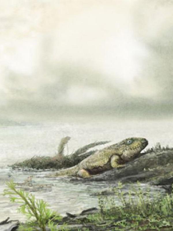 Un colapso de oxígeno marino acabó con los primeros animales de la Tierra