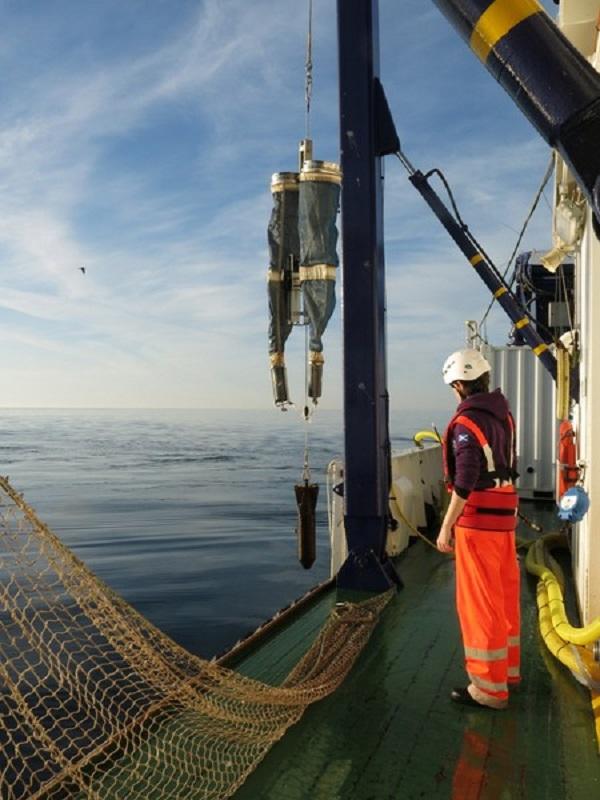 La sostenibilidad triunfa: el stock de la anchoa en el golfo de Bizkaia está en su mejor momento