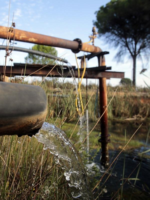 La insostenible sobreexplotación de las aguas subterráneas de Doñana