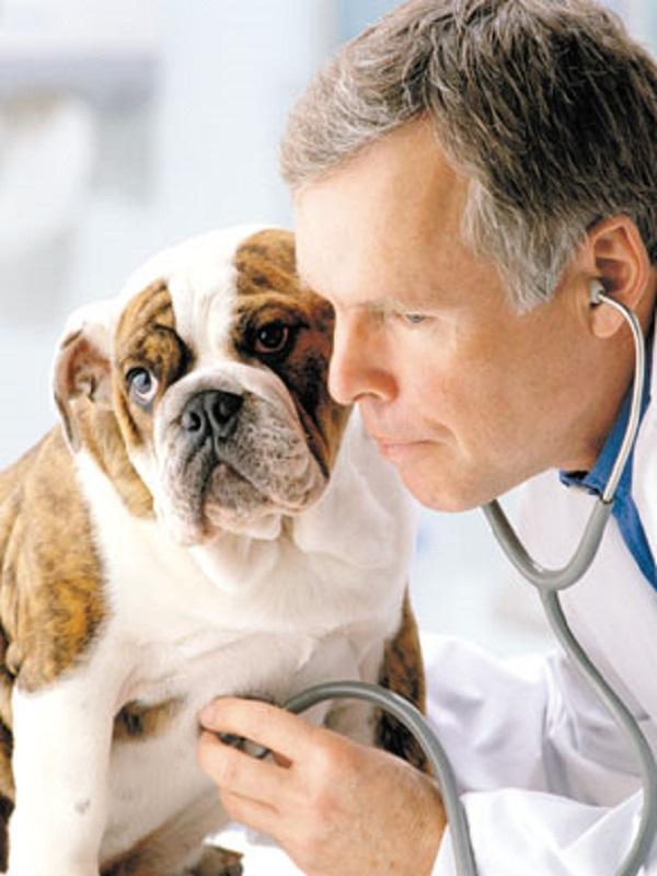 Los veterinarios andaluces quieren garantizar la protección y el bienestar animal