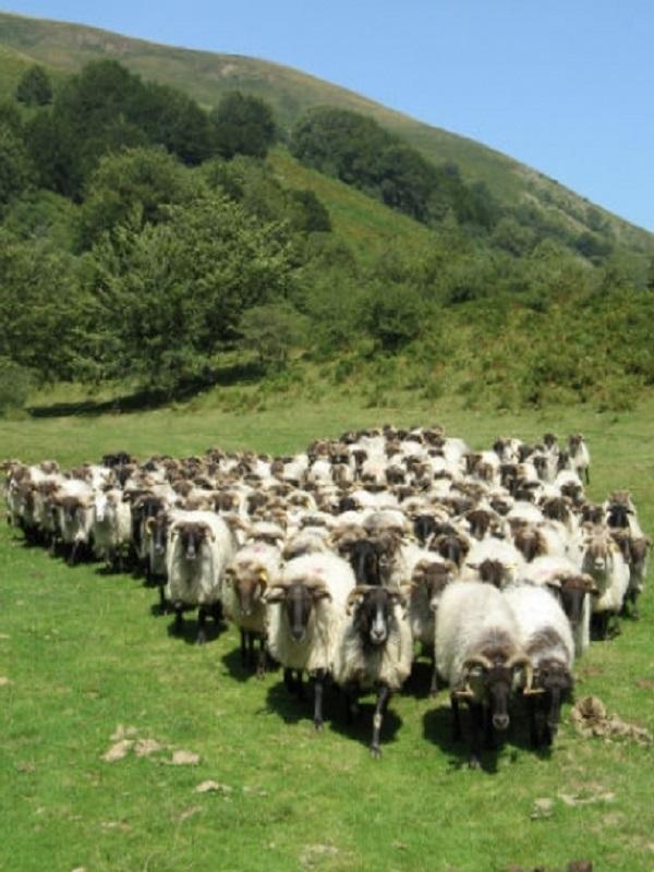 Pastoreo Móvil en el Mediterráneo para combatir el cambio climático