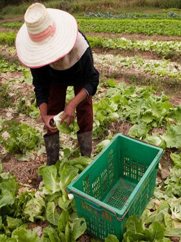 Jóvenes agricultores ecológicos gallegos, una lección para todos