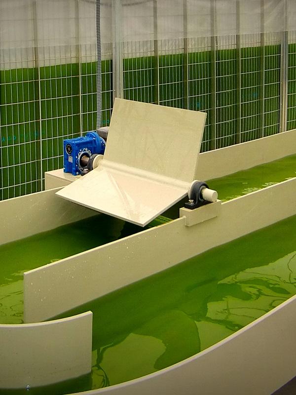 Tecnología verde para el tratamiento de residuos a través del cultivo de microalgas