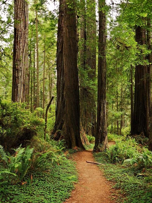 Los bosques españoles se adaptan a las sequías extremas de formas distintas