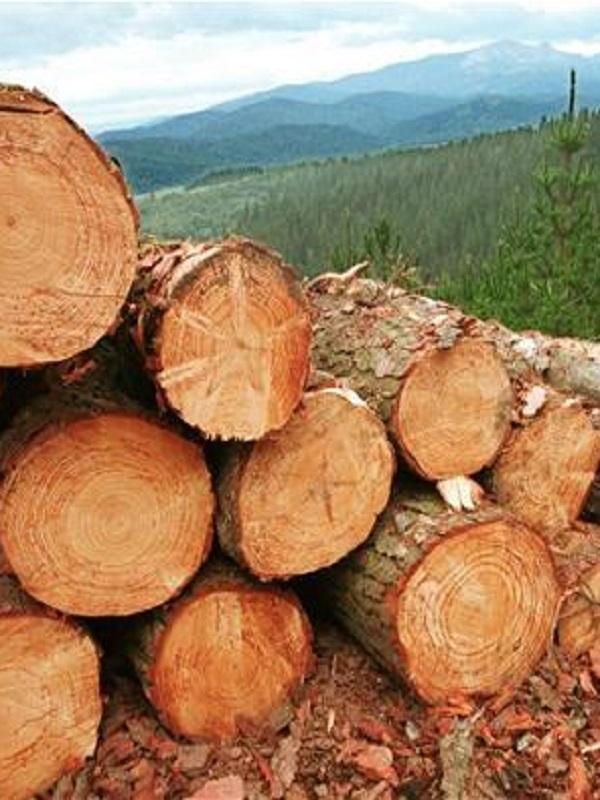 Barra libre de madera ilegal en España