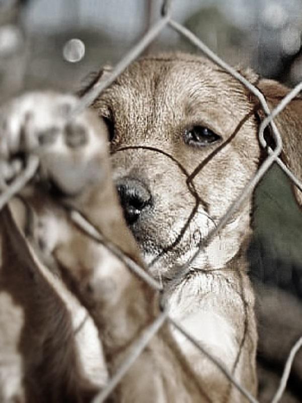 Sevilla contra el maltrato animal