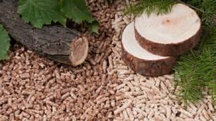 Unos matorrales, biomasa, y la energía verde