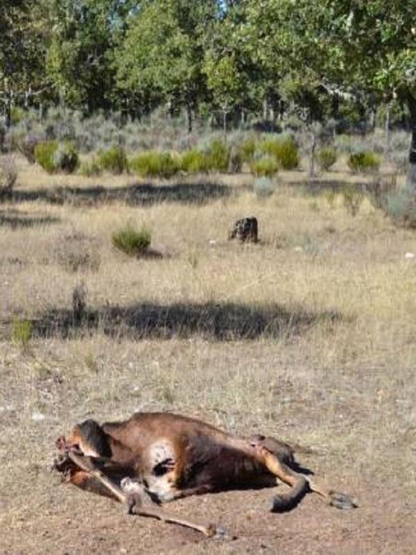 ¿Quién o quiénes están detrás del cuerpo de un ciervo decapitado en la sierra de Alcaraz?