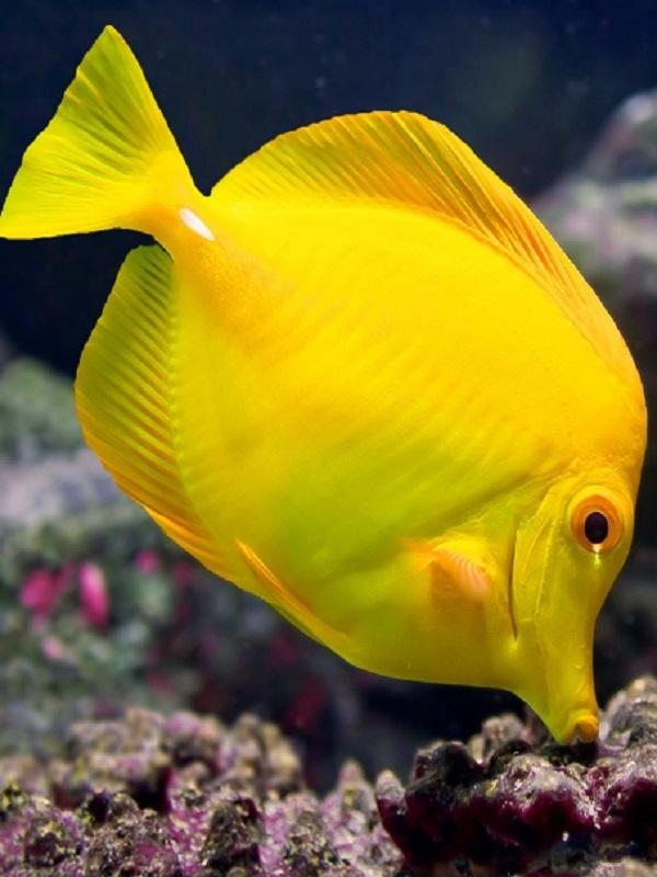Peces limpios, peces inteligentes