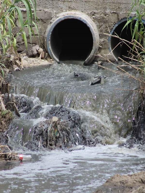 Un hongo fulmina los restos de medicamentos en aguas residuales