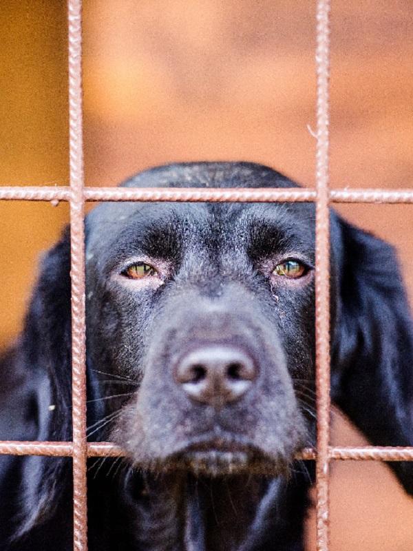 Coria, un sujeto mata a balazos a un perro