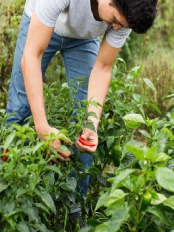 El CCPAE bonifica el pago a los nuevos productores conocido como la ayuda a la certificación