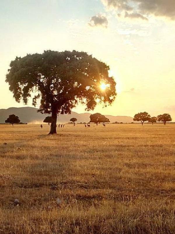 Polémica a cuenta de la plantilla presente en el Parque Nacional de Cabañeros