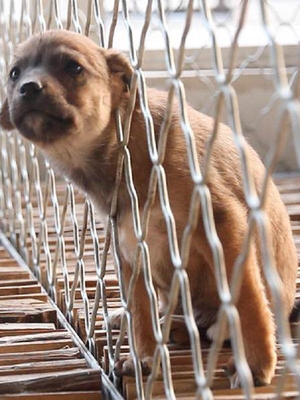 Exterminar perros y gatos una nueva tendencia en la Comunitat Valenciana