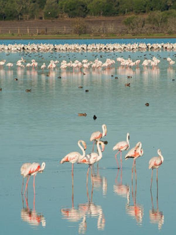Feria Internacional Doñana BirdFair