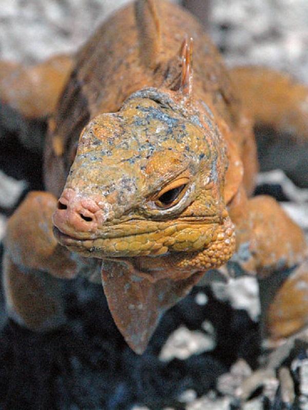 Traficantes de reptiles