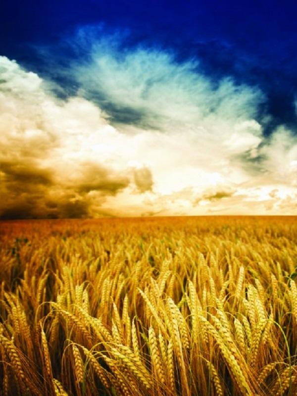 Kellogg se adentra en el mercado ecológico