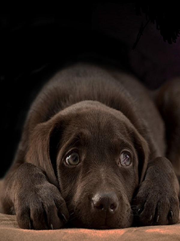 Fallas de Valencia, buscan sistemas para que los perros no sufran por los petardos