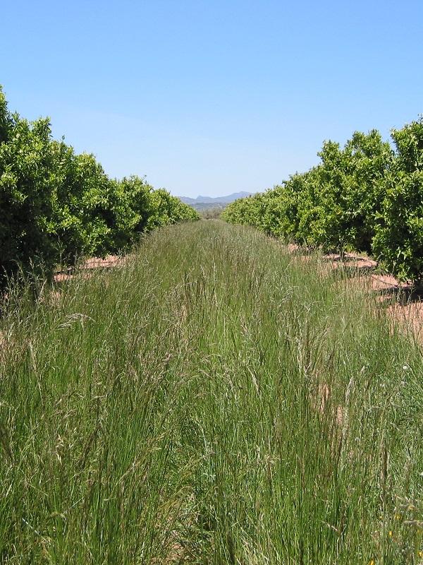 Comienzan los ensayos de un proyecto que persigue la gestión integrada de las malas hierbas