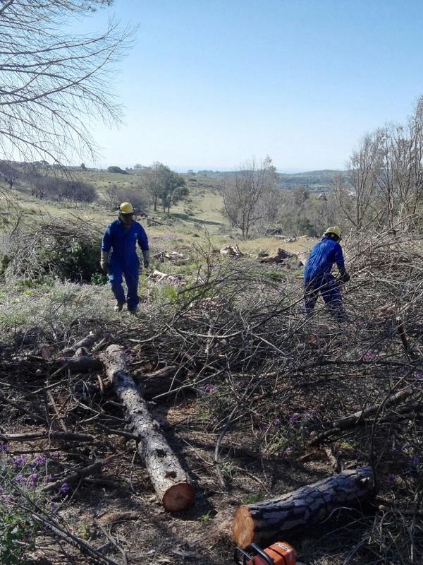 Andalucía pondrá en marcha tratamientos selvícolas mecanizados para prevenir incendios forestales