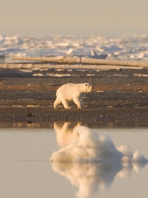 El hielo ártico se queda en volúmenes ridículos