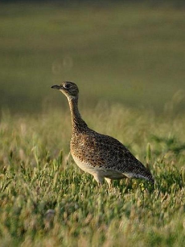 Las políticas agrarias europeas ponen a las aves del continente en la cuerda floja