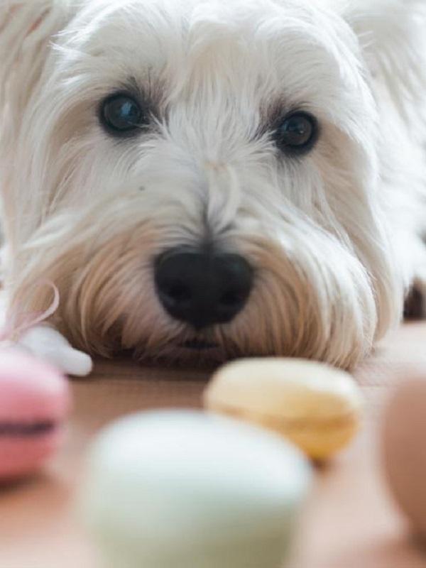 Las tiendas de animales cada vez venden menos mascotas