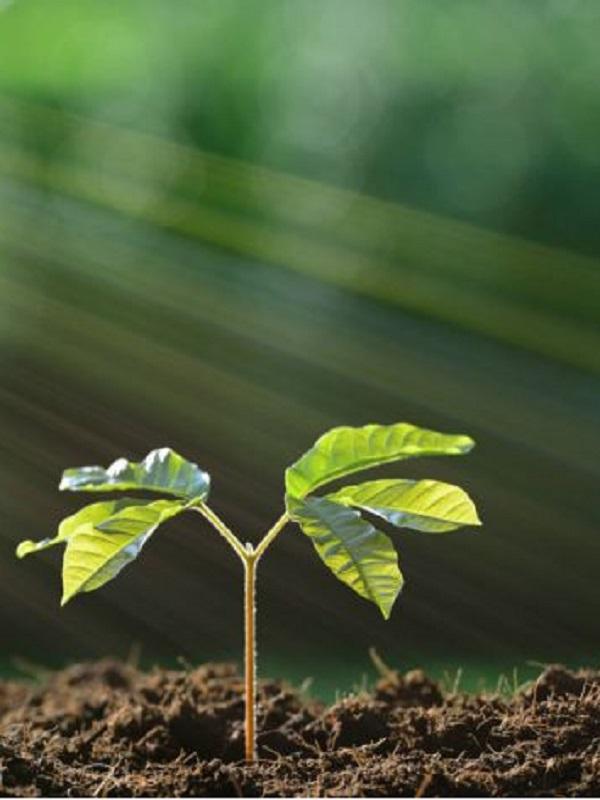 ¿Cómo sobreviven las plantas en condiciones de escasez de energía?