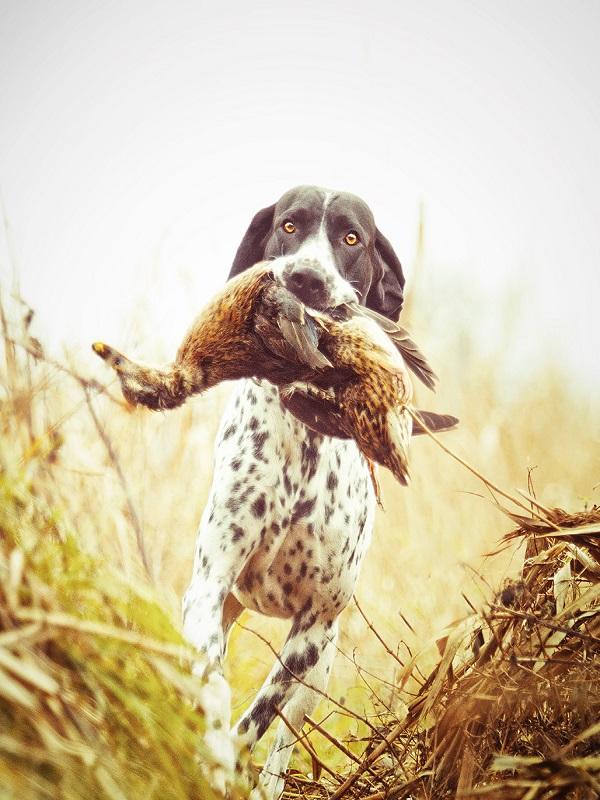 El SEPRONA recupera un perro de caza robado en Totana