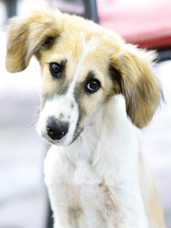 Lucha sin cuartel por una ley estatal contra el maltrato animal