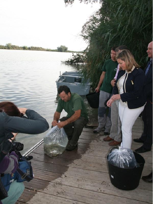 Andalucía libera en el río Guadalfeo alevines de anguilas