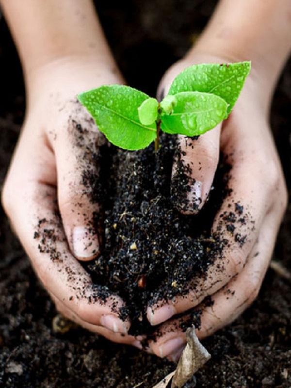 La preservación del medio ambiente pasa por un modelo económico sostenible