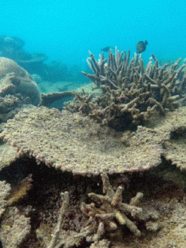 Los arrecifes de coral bajo el yugo del CO2