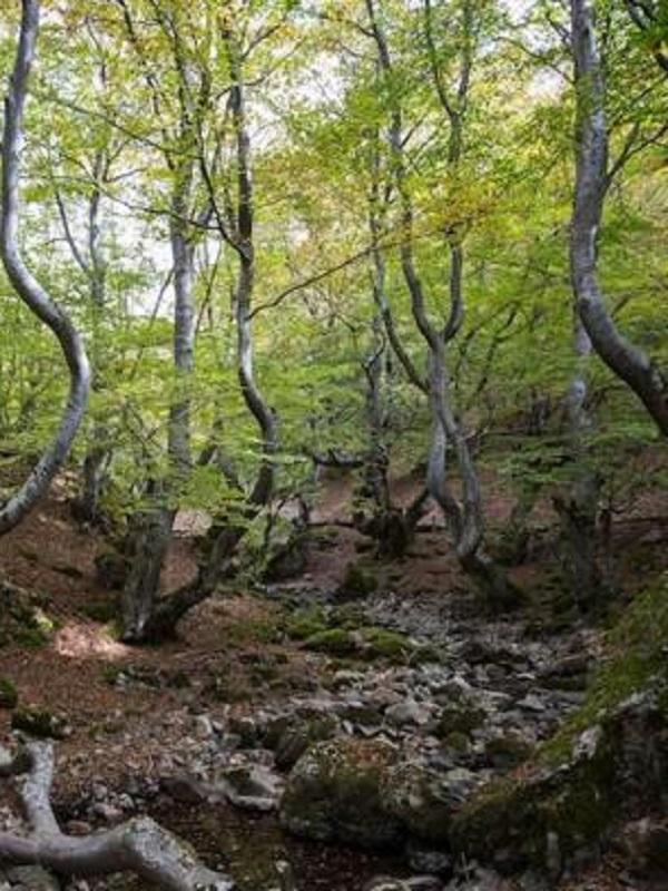 El enorme desprestigio de la gestión de las Reservas de la Biosfera de Asturias
