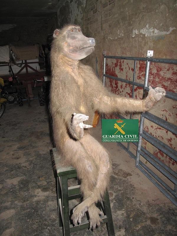 Un palurdo intentaba vender por Internet una tortuga carey y un primate desnaturalizados