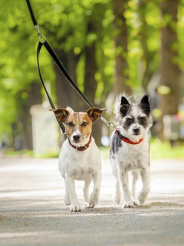 Gijón debería tomar medidas para terminar con las heces de perro en vías pública
