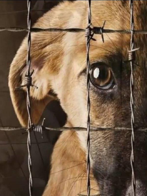 En Piedratajada suma y sigue el maltrato animal