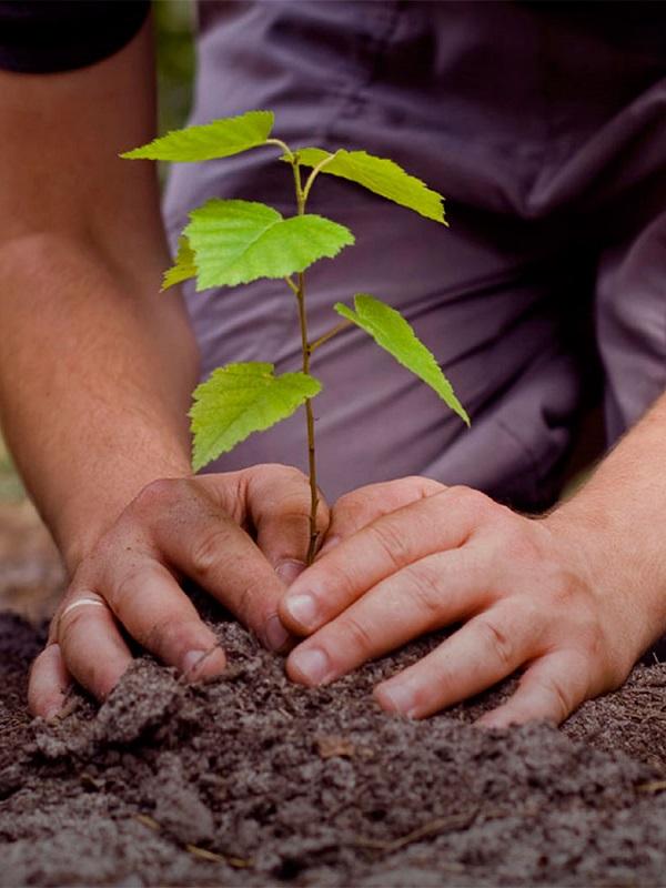 Abanca arranca la reforestación de Galicia