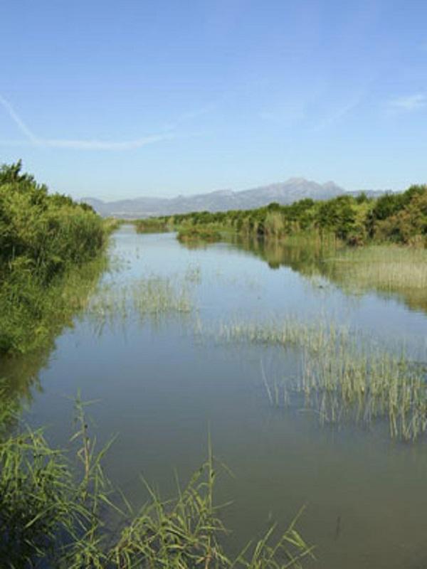 Miles de plantas para la ribera en S'Albufera