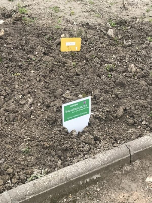 El Jardín de Flora Autóctona de Jaén incorpora la Rivasmartinezia Cazorlana